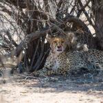 Kalahari Transfrontier National Park