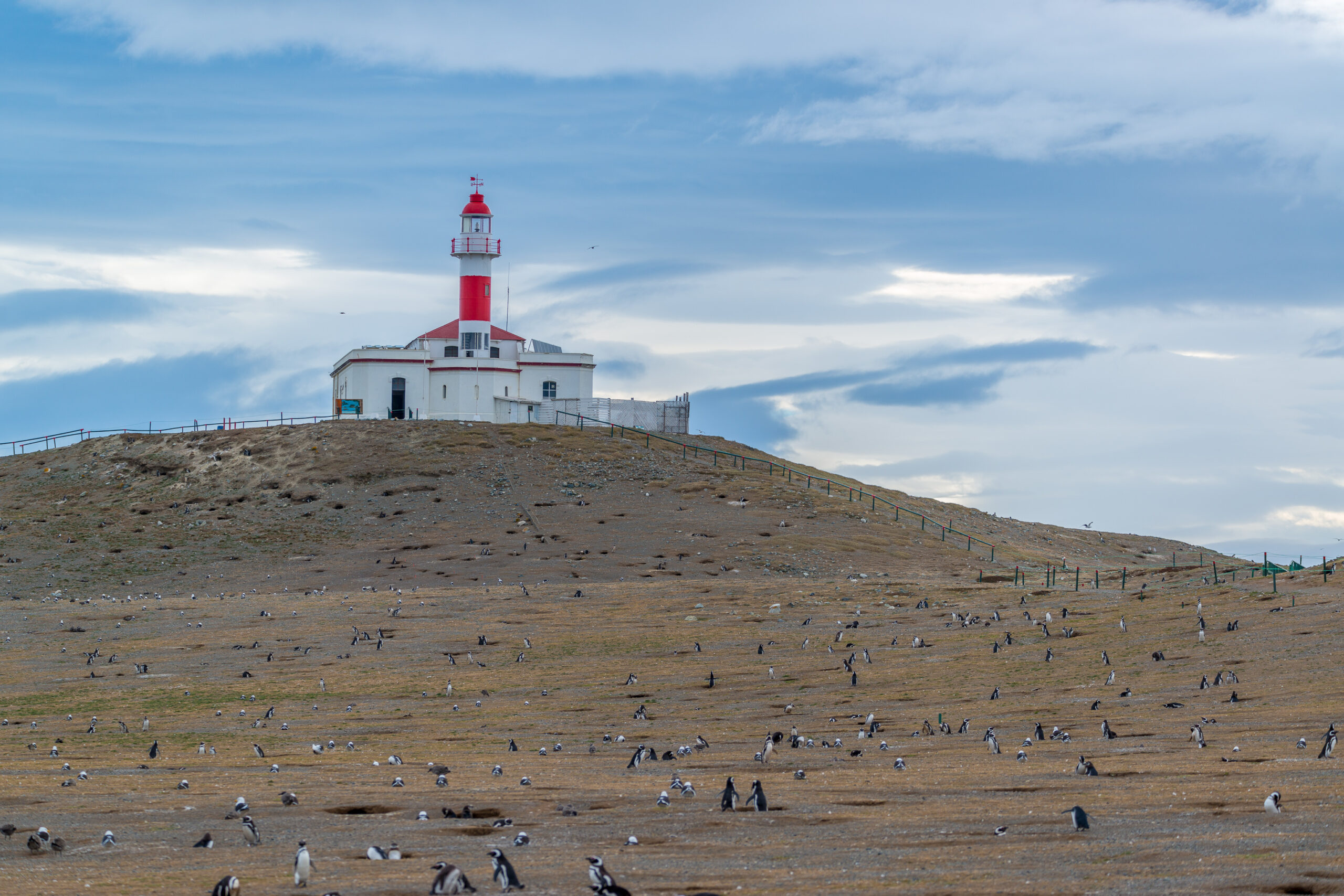 Isla Magdalena, Chile